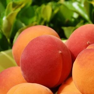 aprikose-fruchtpulver