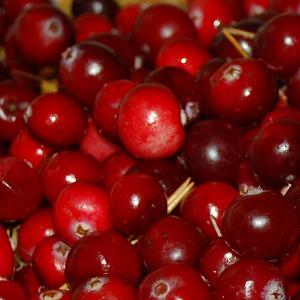 preiselbeer-cranberry-fruchtpulver